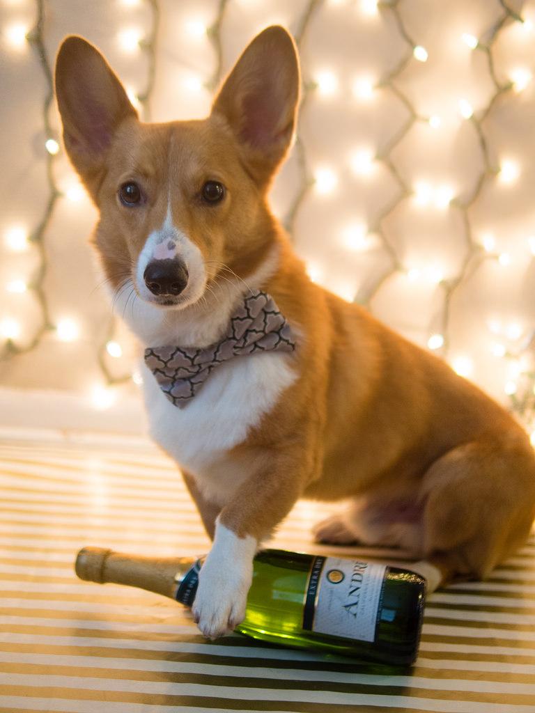corg champagne.jpg
