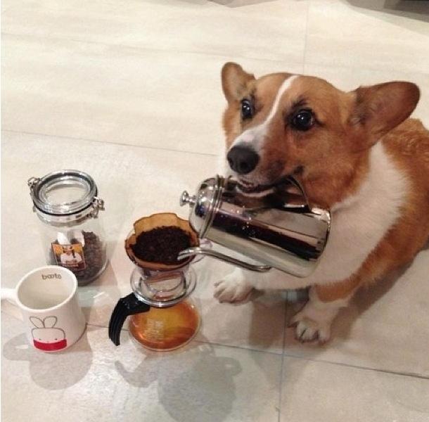 corg cappuccino.jpg