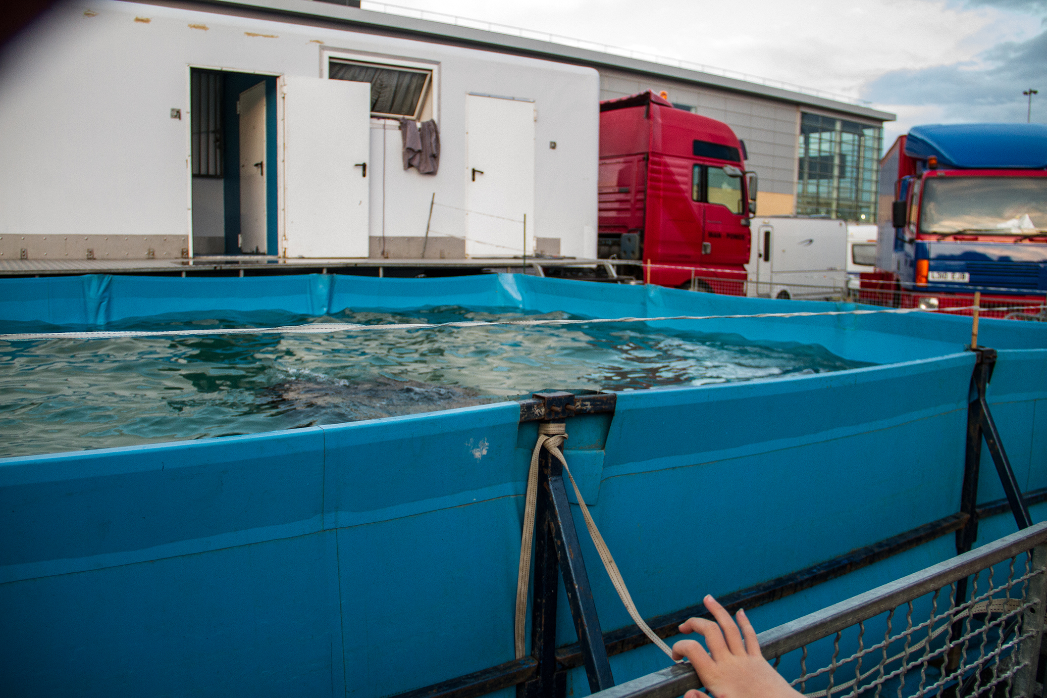 The sea lion pool