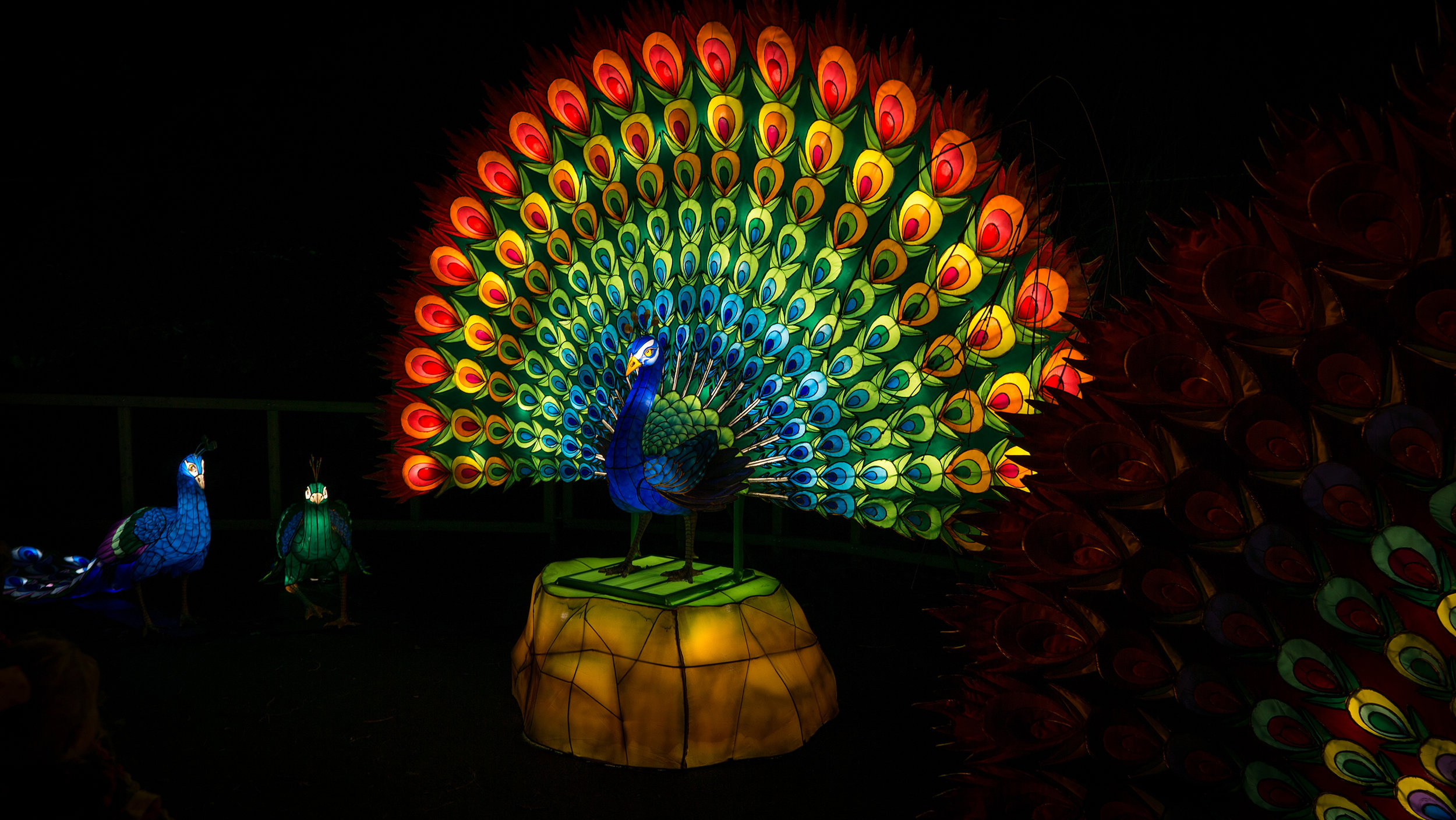 Peacock light sculptures