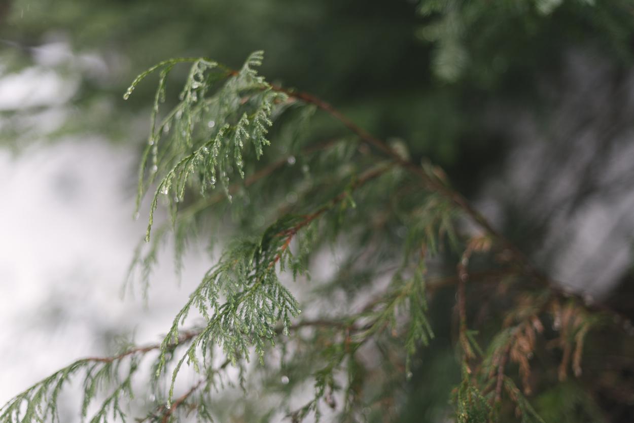 grouse-mountain-engagement-04.jpg