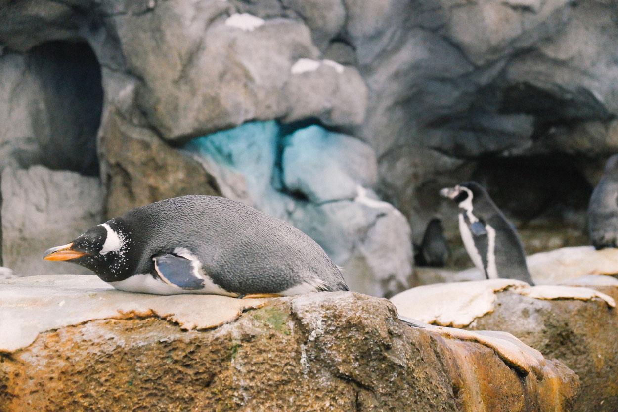 calgary-zoo-02.jpg