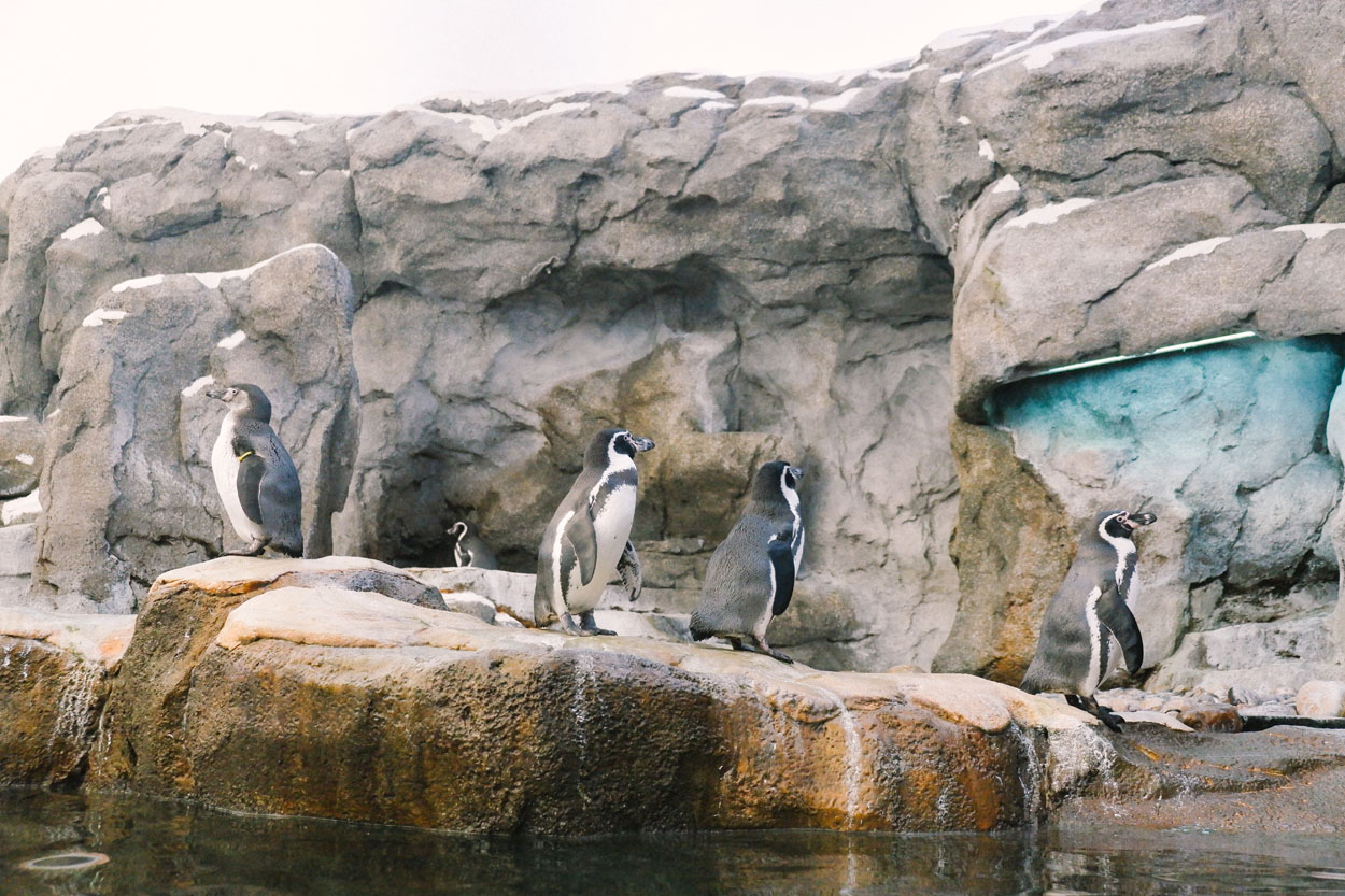 calgary-zoo-01.jpg