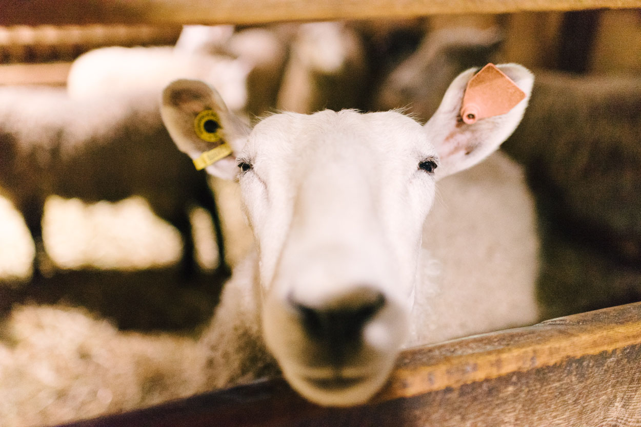 riverdale-farm-1.jpg