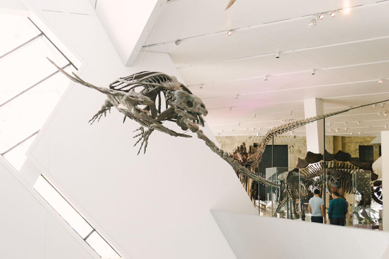 royal-ontario-museum.jpg