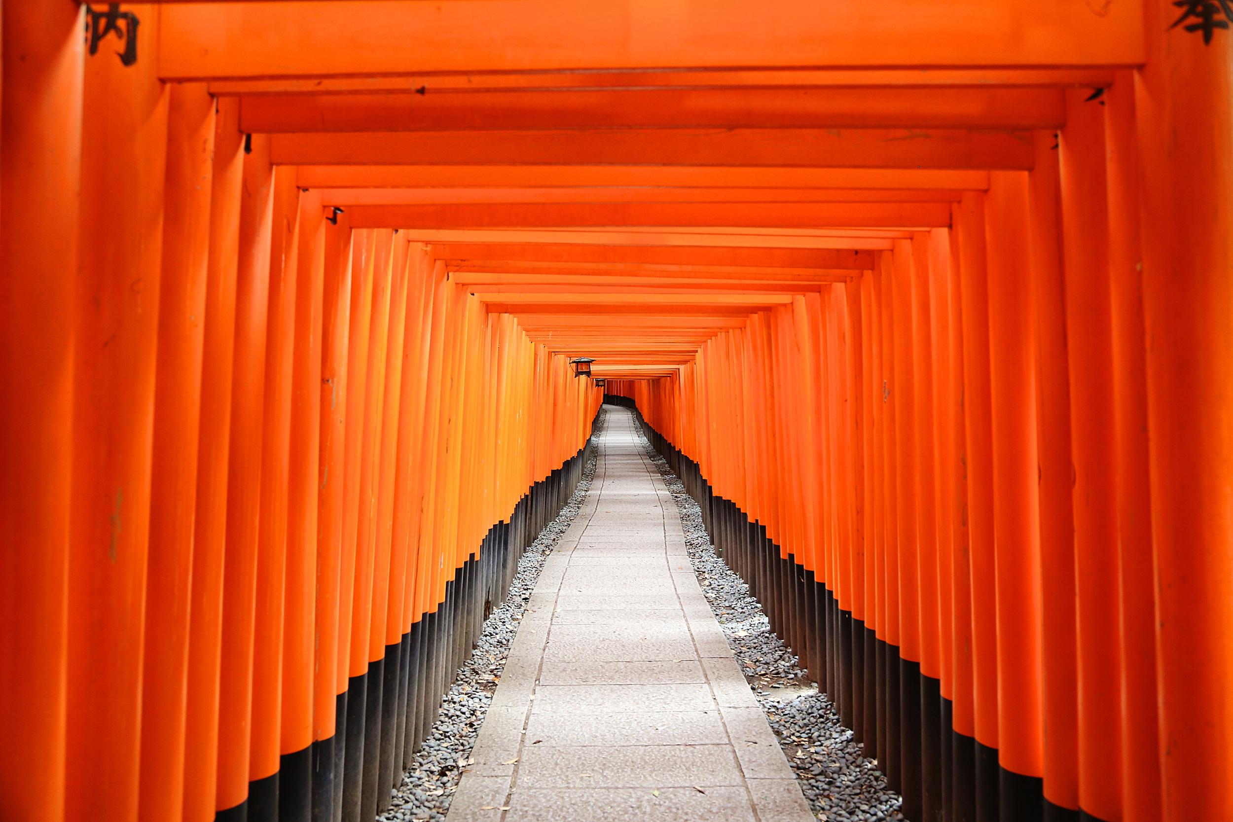 orange row.jpg