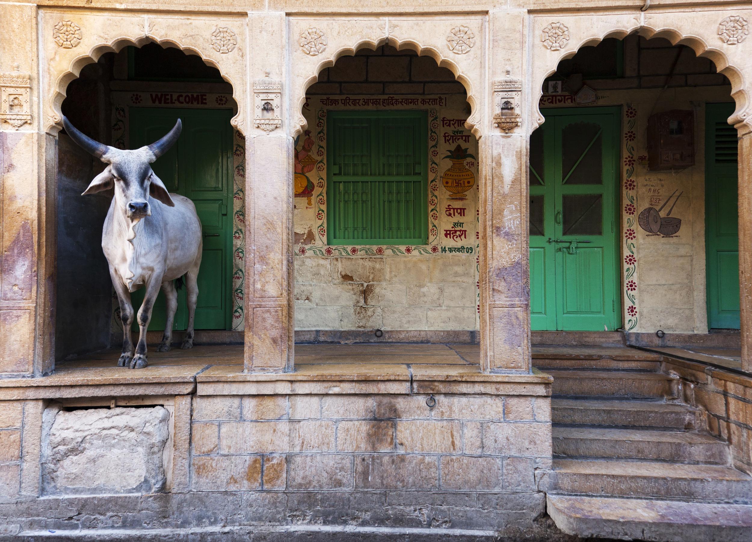 cow_house.jpg