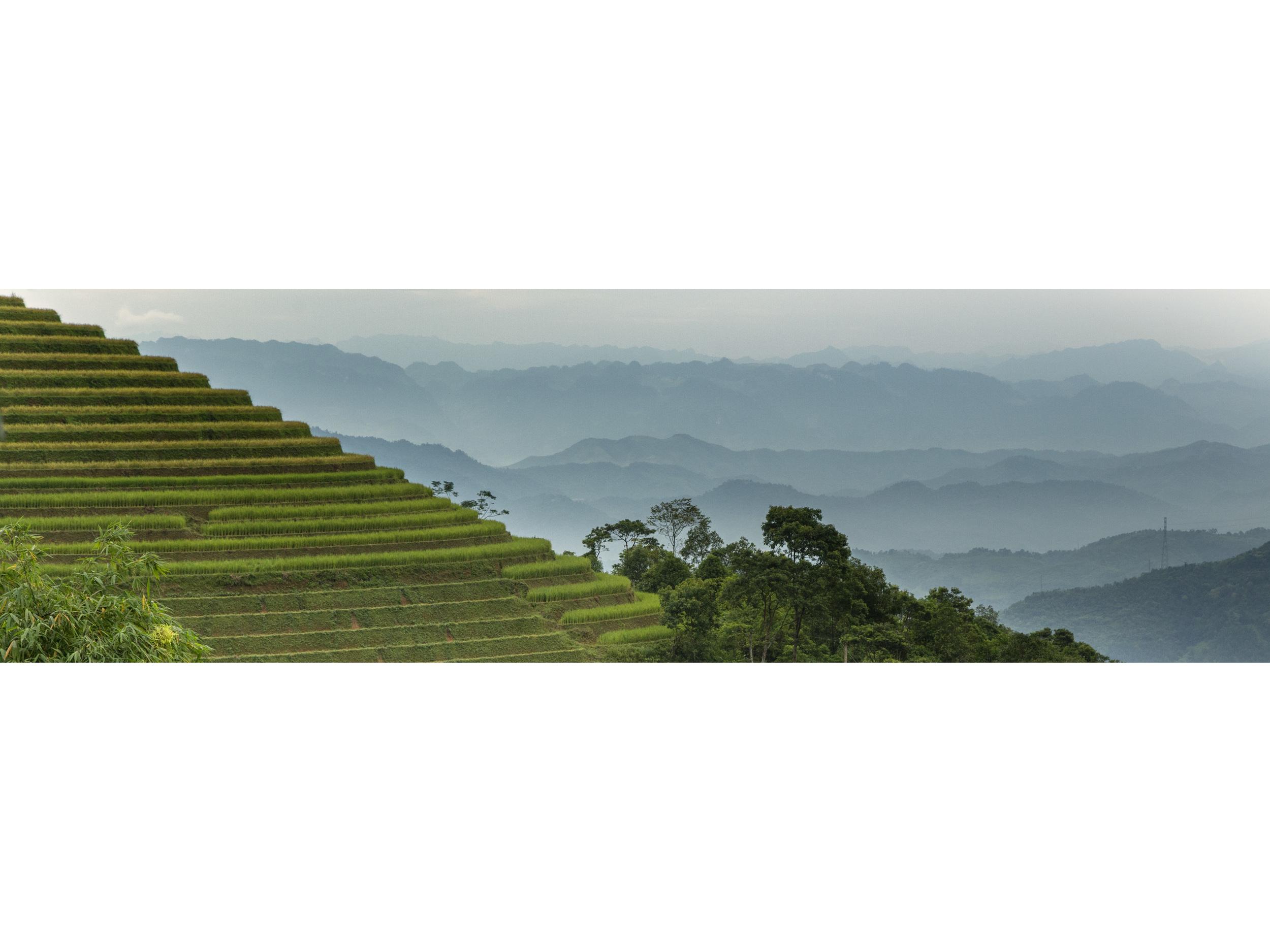 rice pyramid43.jpg
