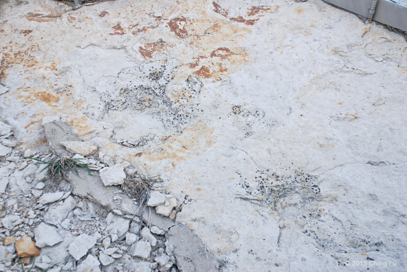 These are NOT dinosaur footprints!