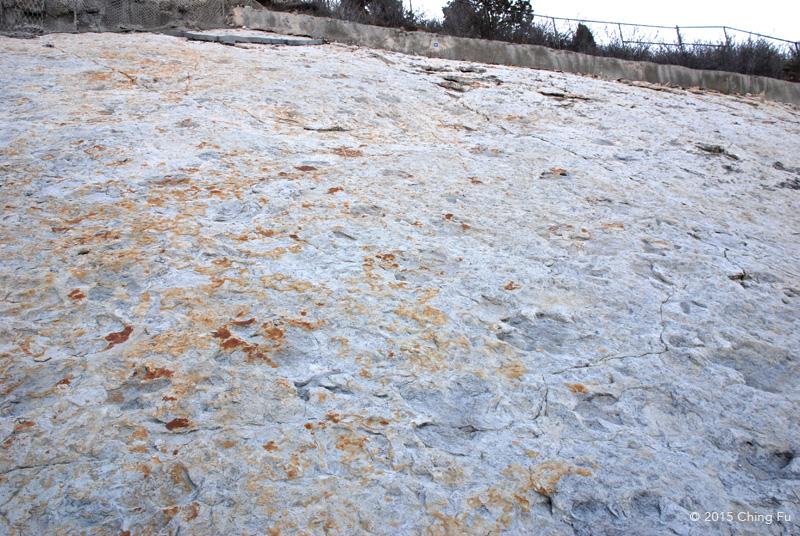 Tracksite wall full of dinosaur footprints.
