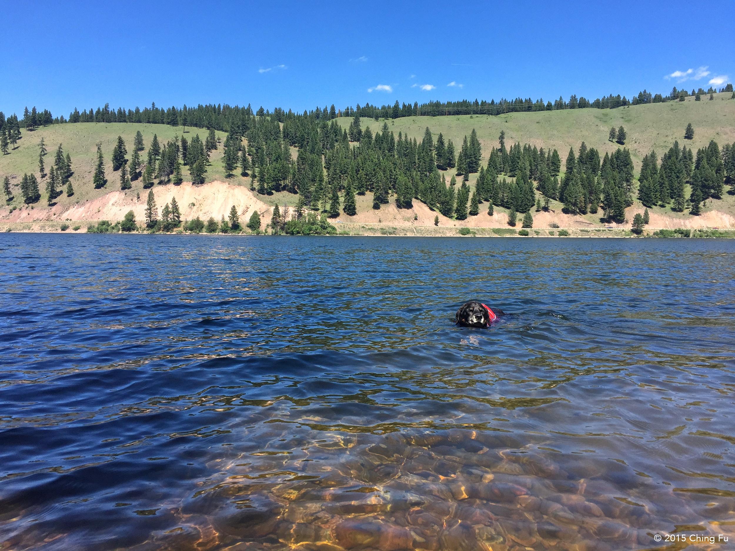 Tybee non-stop swimming.