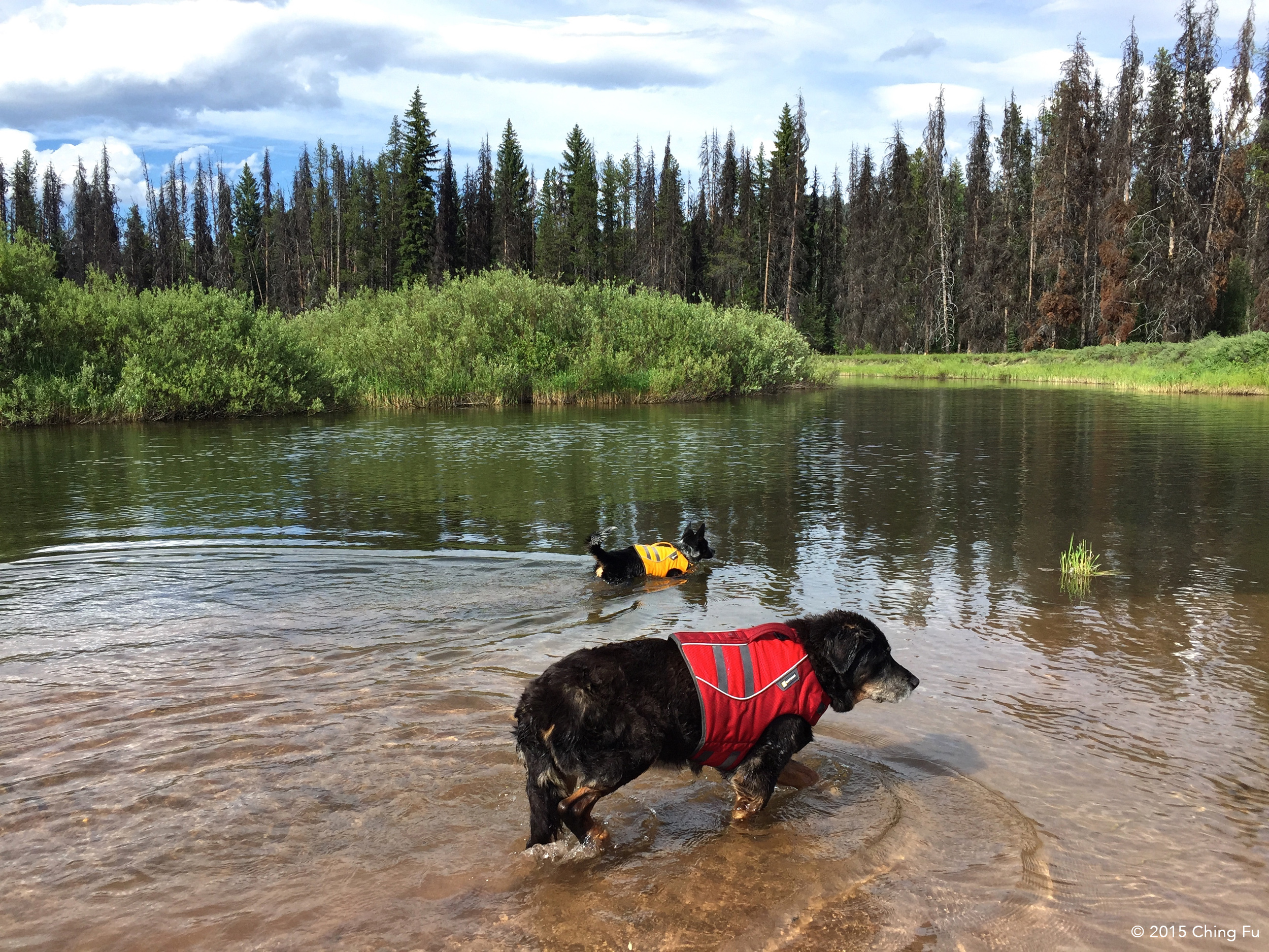 Tybee and Tyki looking adorable in their lifejackets.