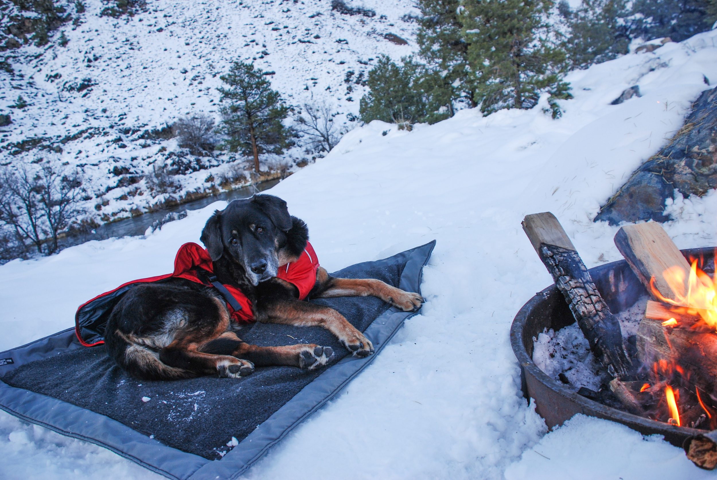 Tybee chilling by a campfire in the snow.