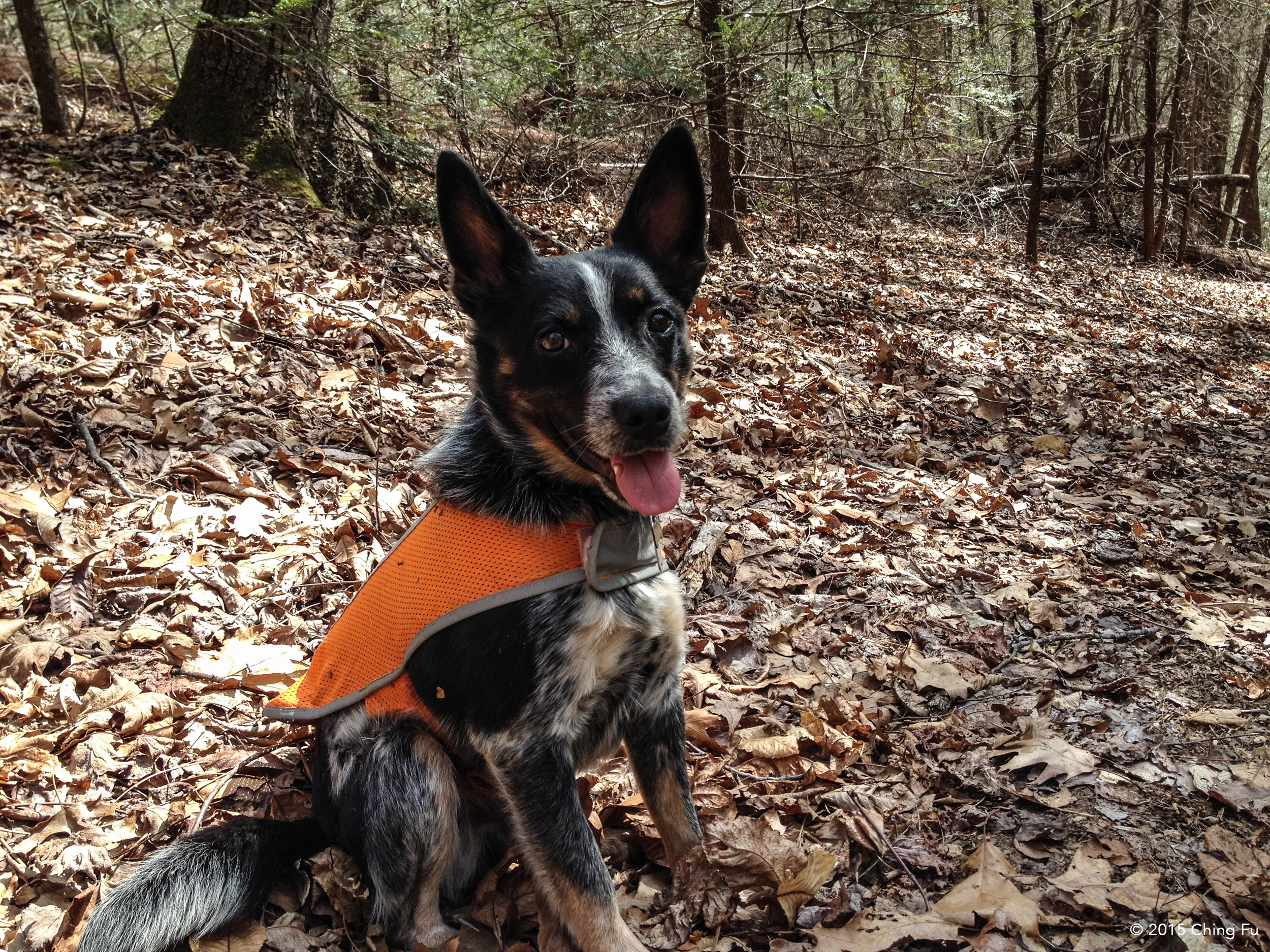Tyki wearing his safety vest.