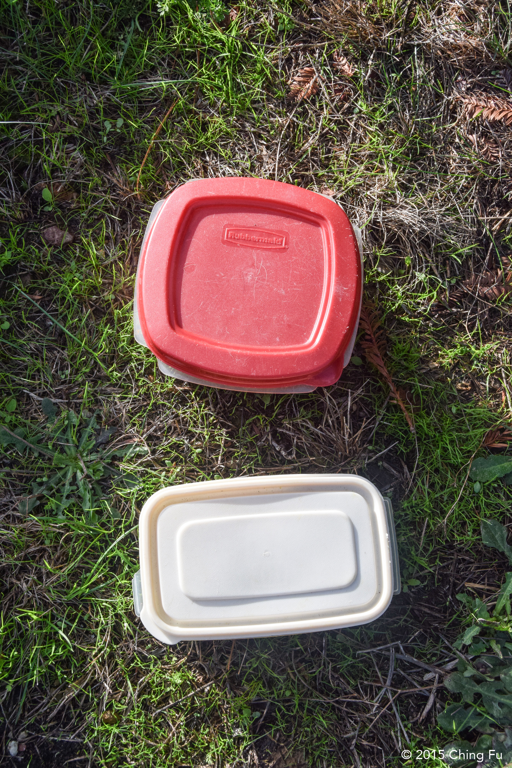 Plastic containers that we keep their dinners in which live inside the truck.