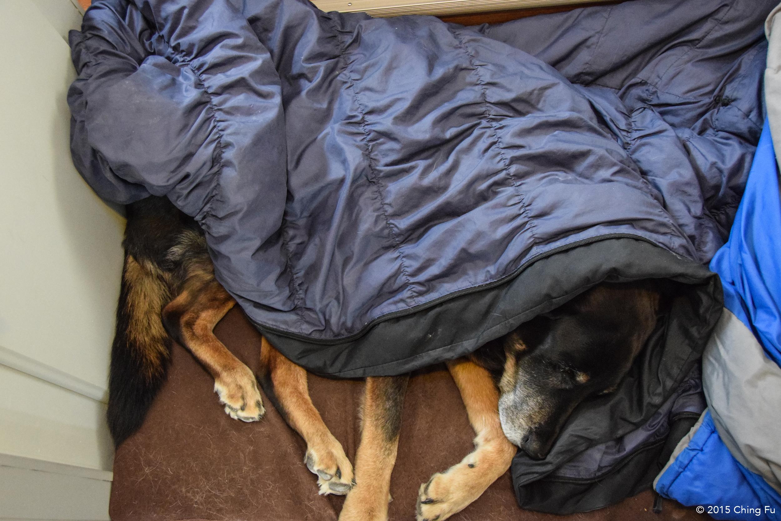 Tybee in her sleeping bag.