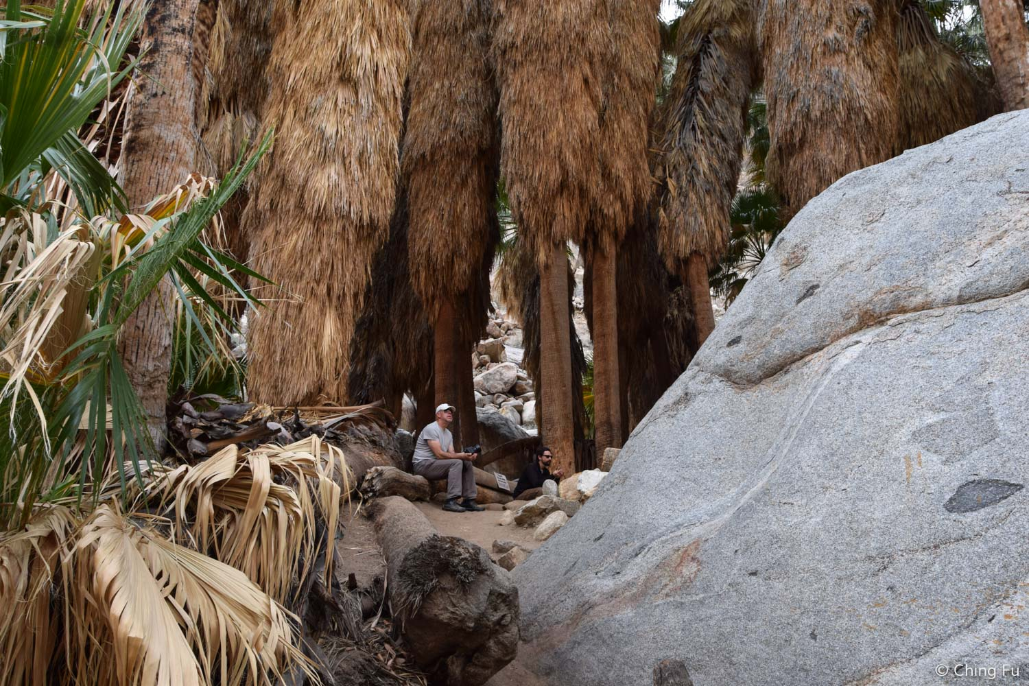 Hanging out under the grove of palm trees in the middle of desert and rocks.