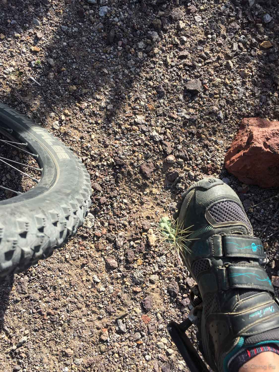 I kicked a piece of cholla off the trail so Tyki wouldn't accidentally run over it but instead it got stuck to my shoe. Lesson: don't kick them, they will go through shoes all of kinds!