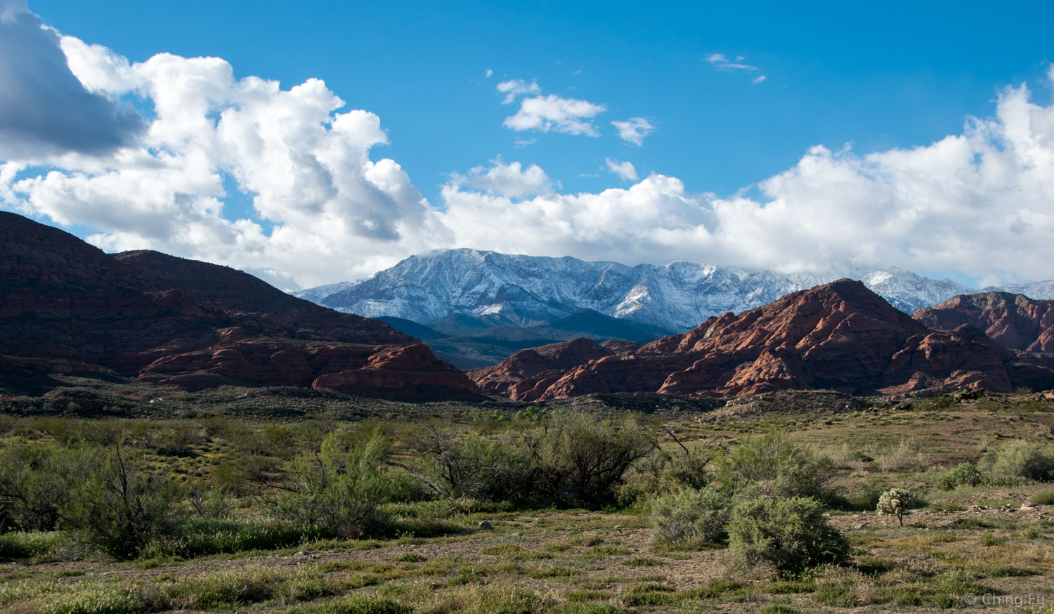View in Red Cliffs National Conservation Area.
