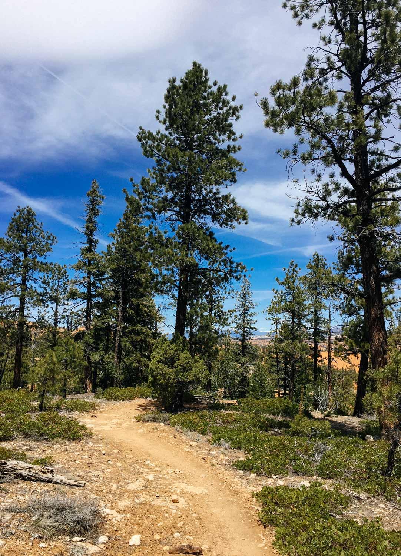 Mountain biking Thunder Mountain Trail.