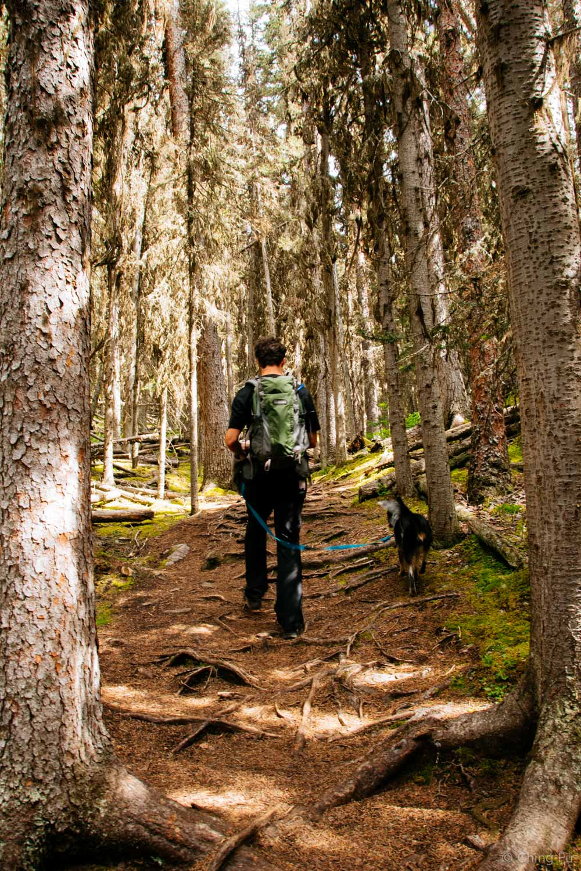 Hiking through dense woods on Stoney Squaw trail.