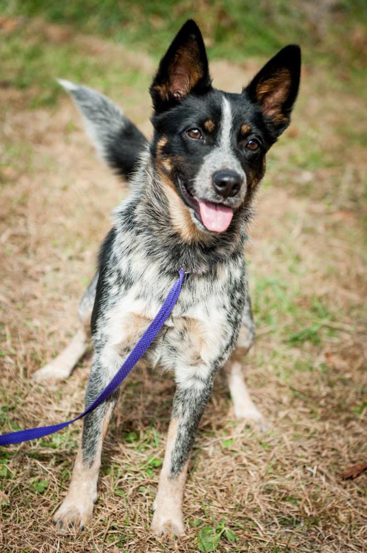 Tyki's adoption photo. Look at those ears!