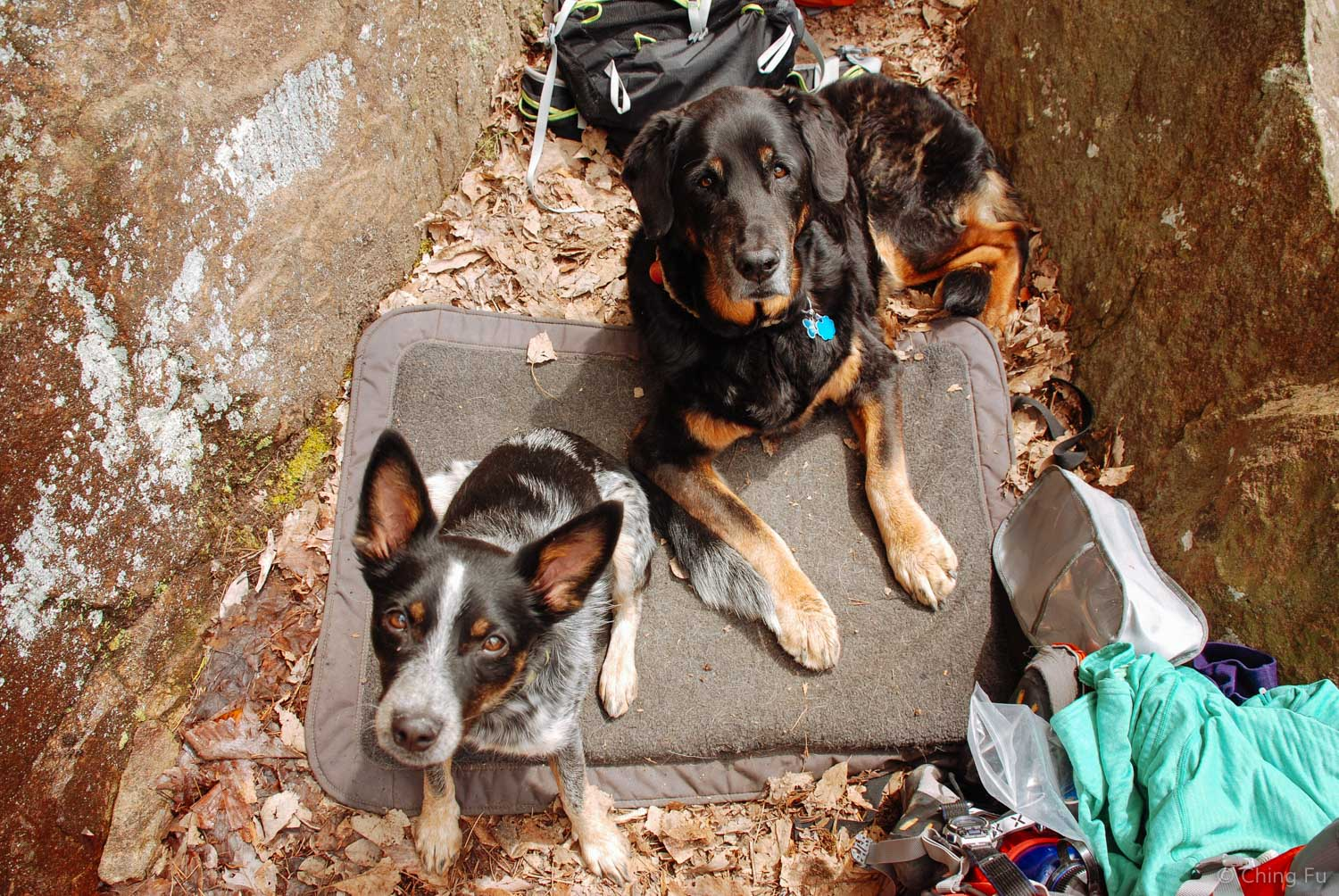 Tyki and Tybee chilling while we were rock climbing in TN a few years ago.