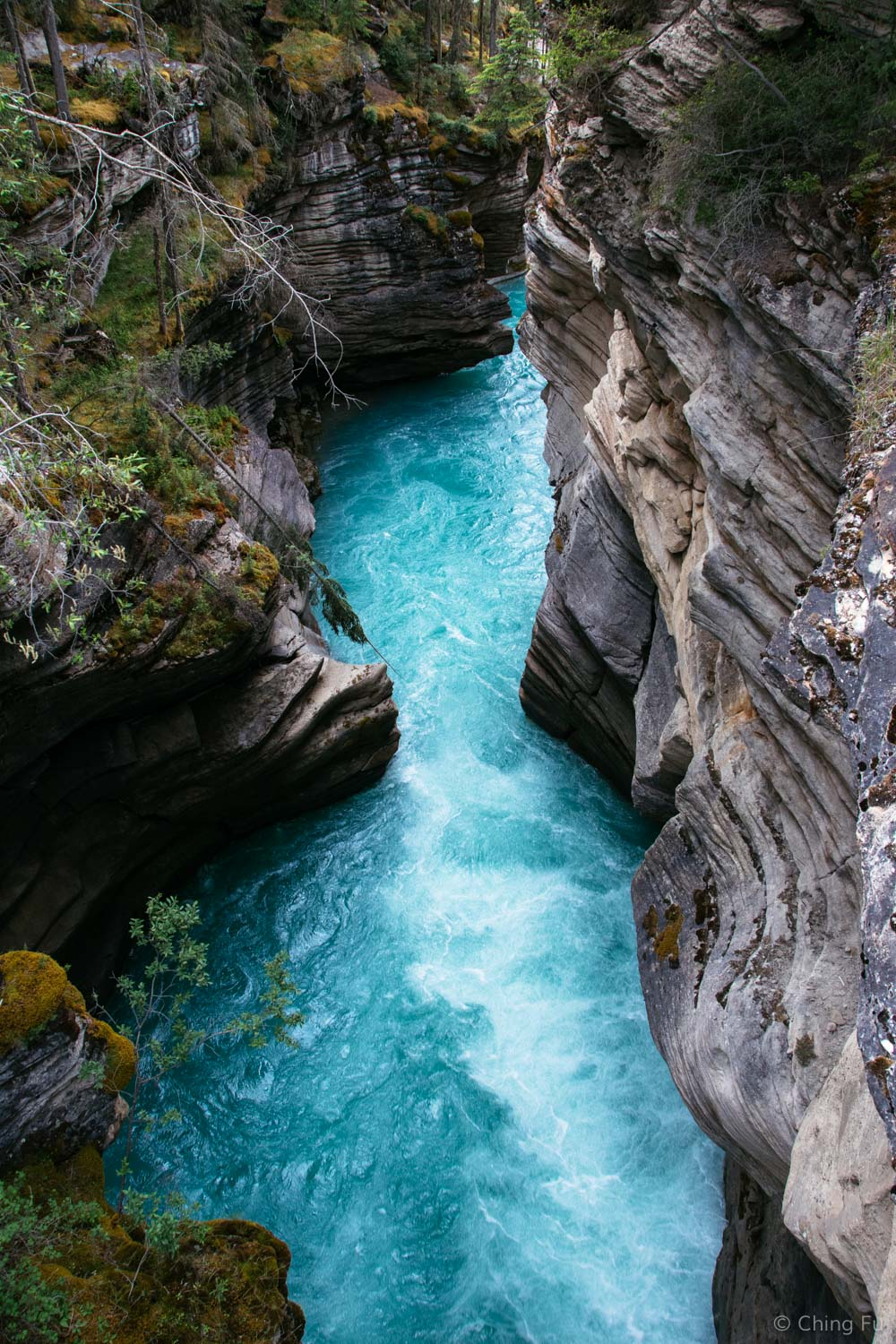 The section of Athabasca River after the waterfall.