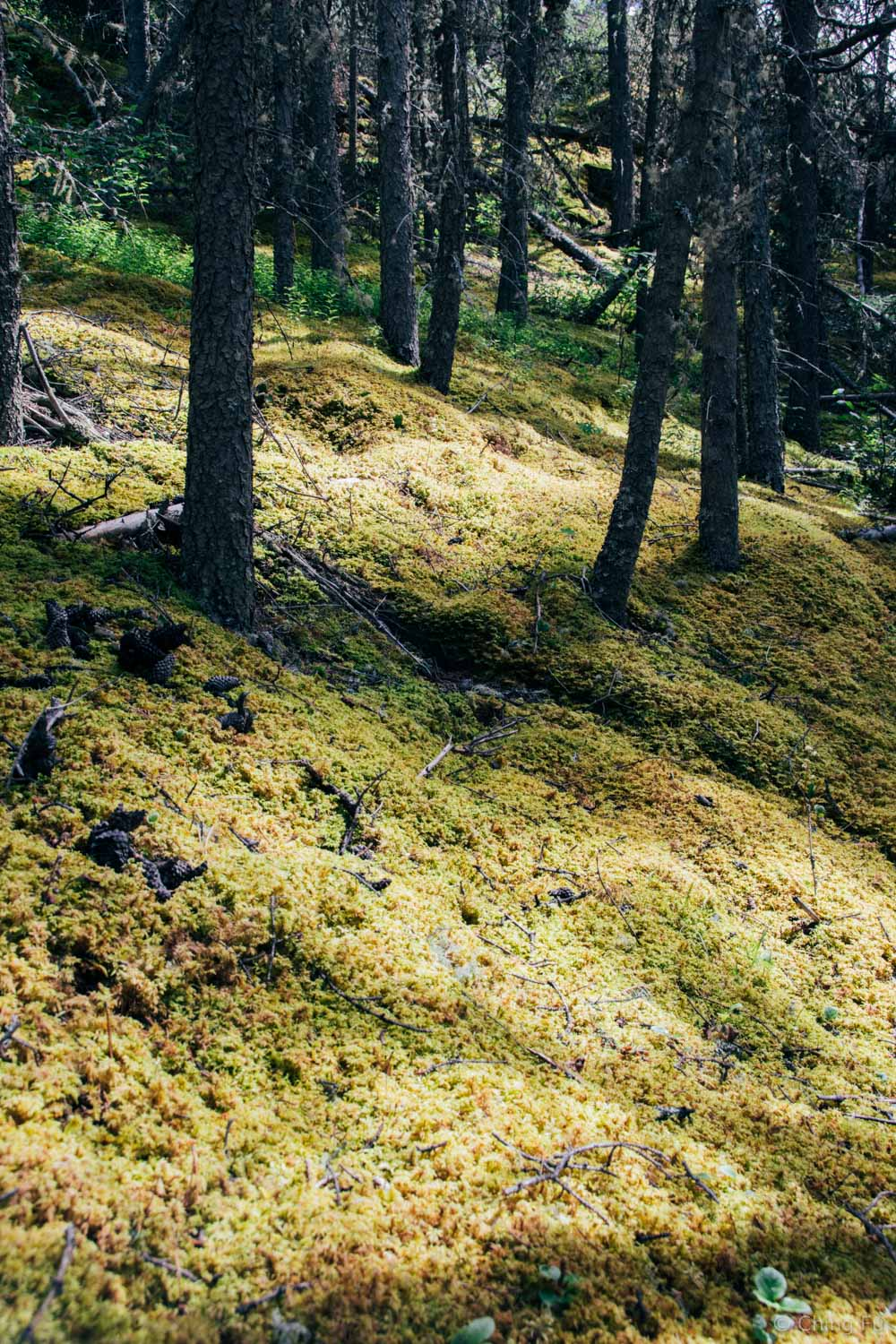 Mossy forest on our M'Clintock hike.