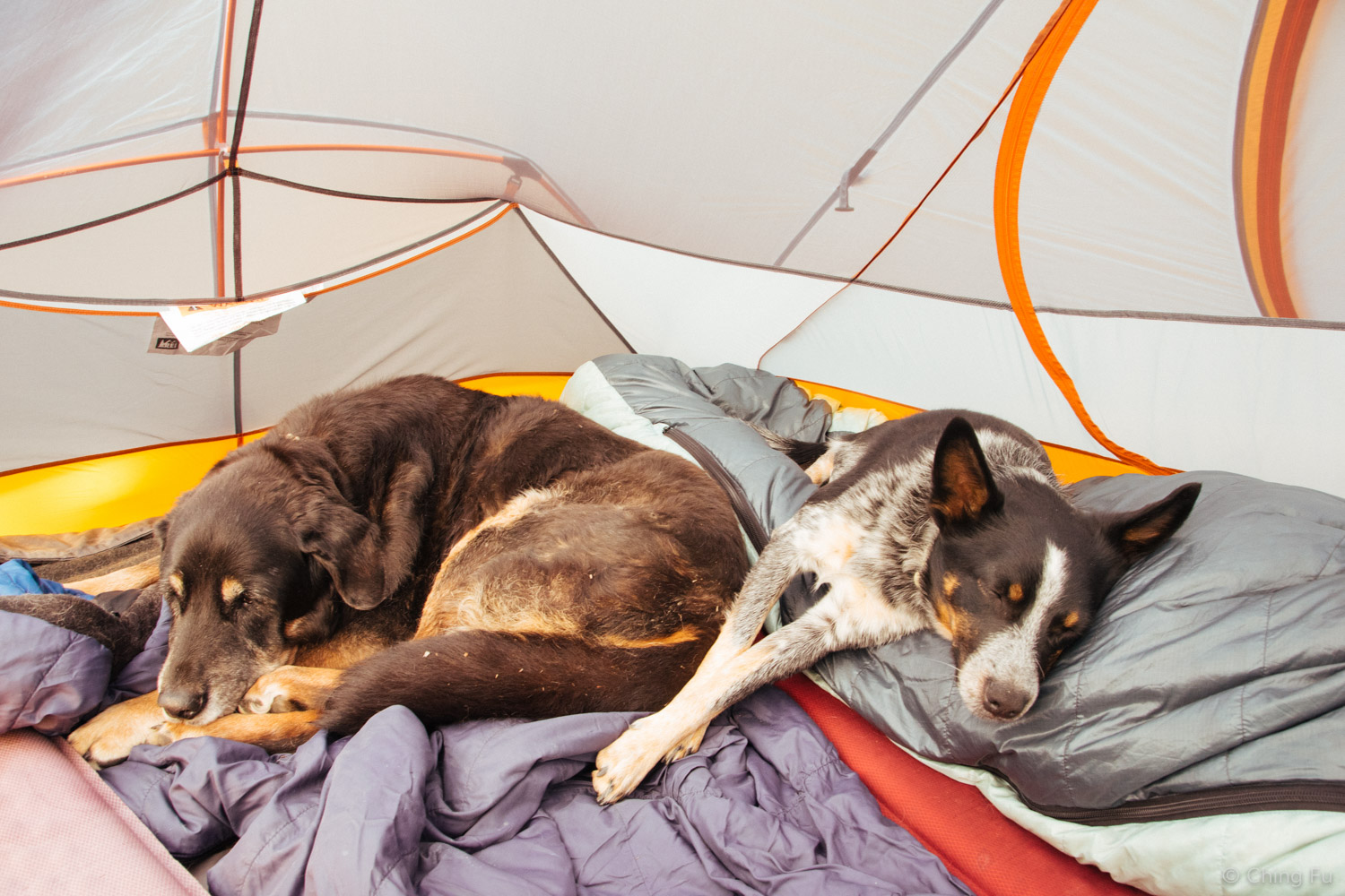 Tybee and Tyki in a tent.