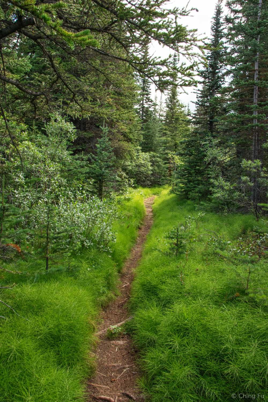 A trail on Montana Mountain.