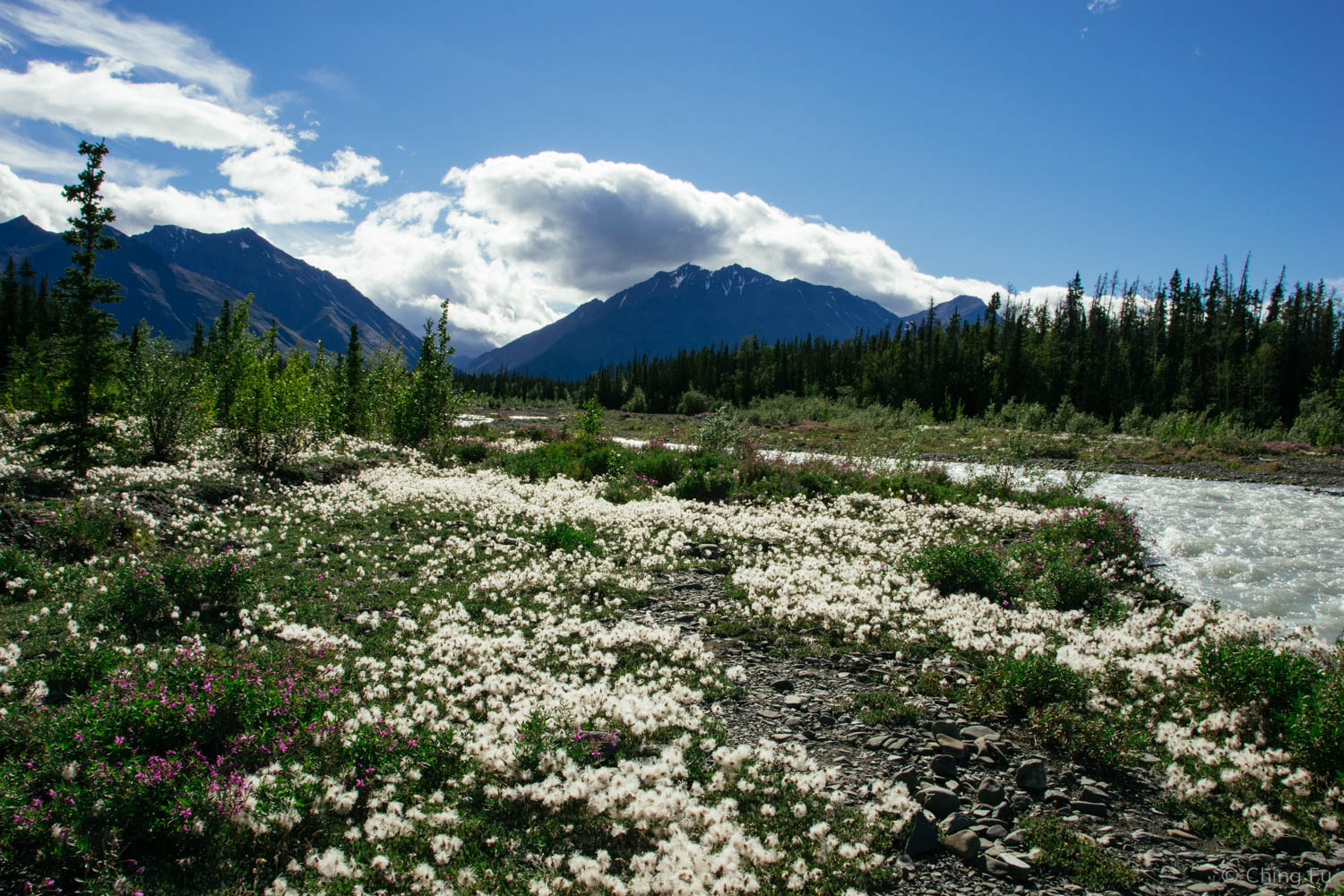 The riverbank covered in dryas and fireweeds.