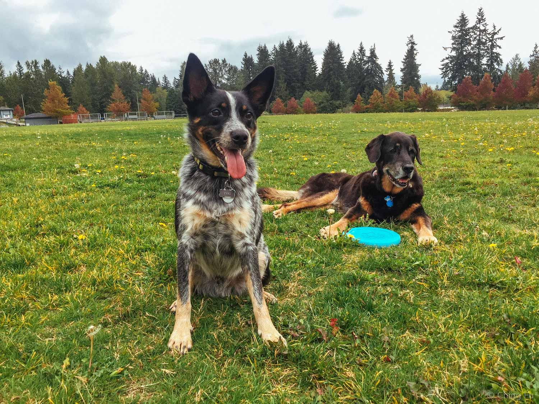 Tyki and Tybee in Washington.
