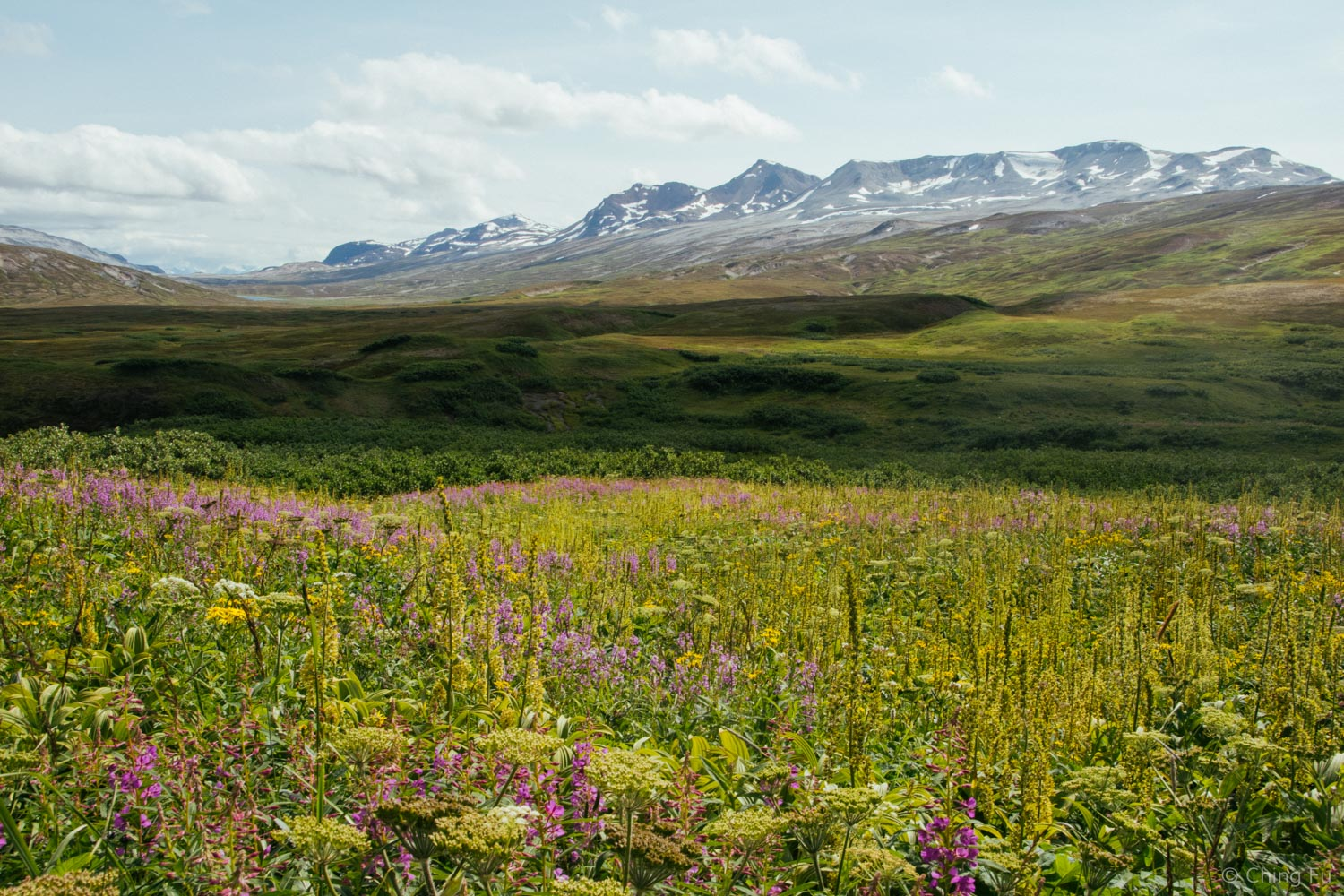 Tons of wildflowers.