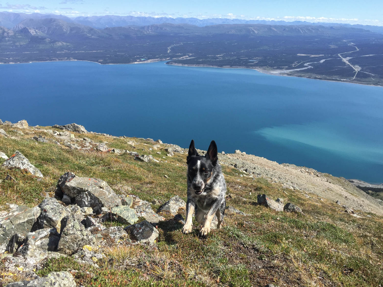 Tyki didn't mind the trail at all.