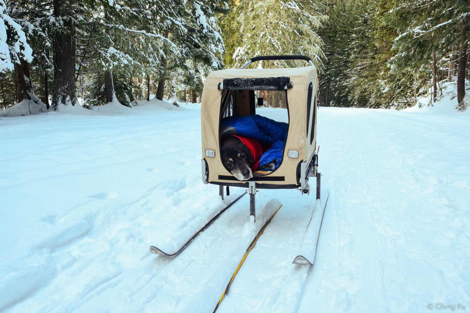 We converted her trailer to have skis so it would also work in the snow.
