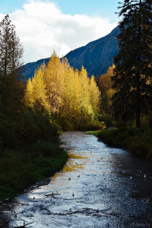 Fish Creek, Hyder, Alaska