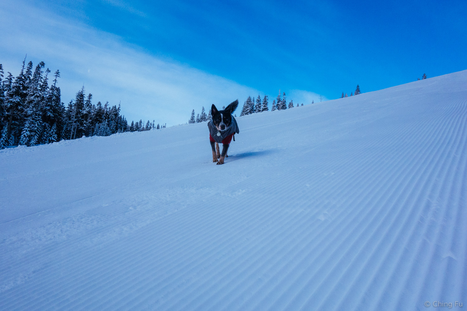 Tyki coming down Crystal Mountain Resort trails.