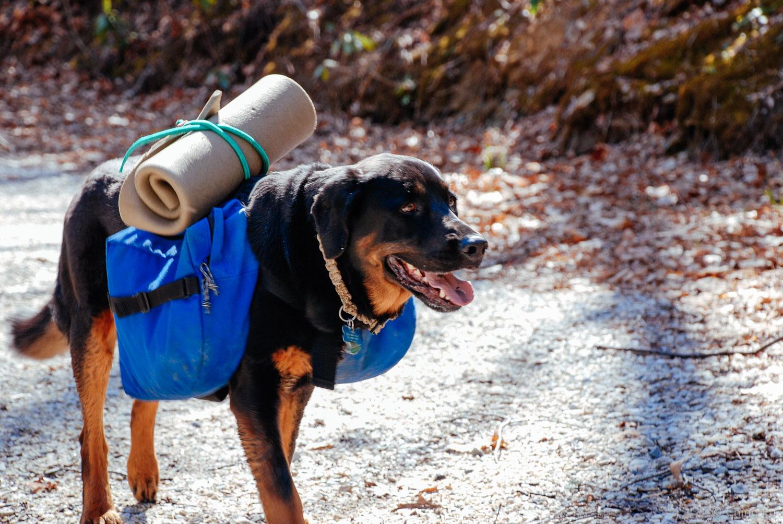 Tybee backpacking.