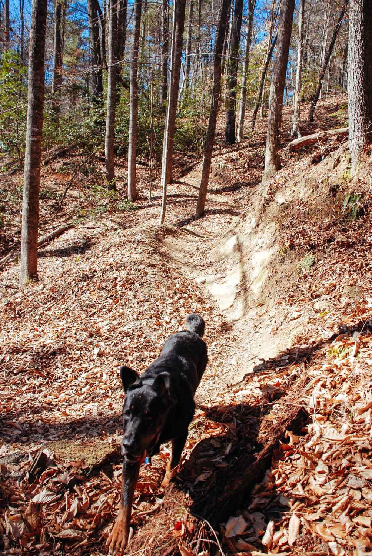 Tybee at Warrior Creek trail.