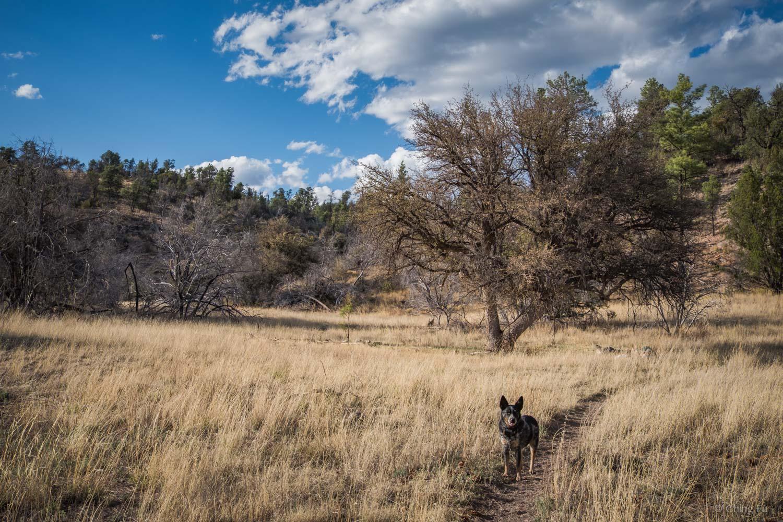 Tyki hiking through Gila Wilderness.