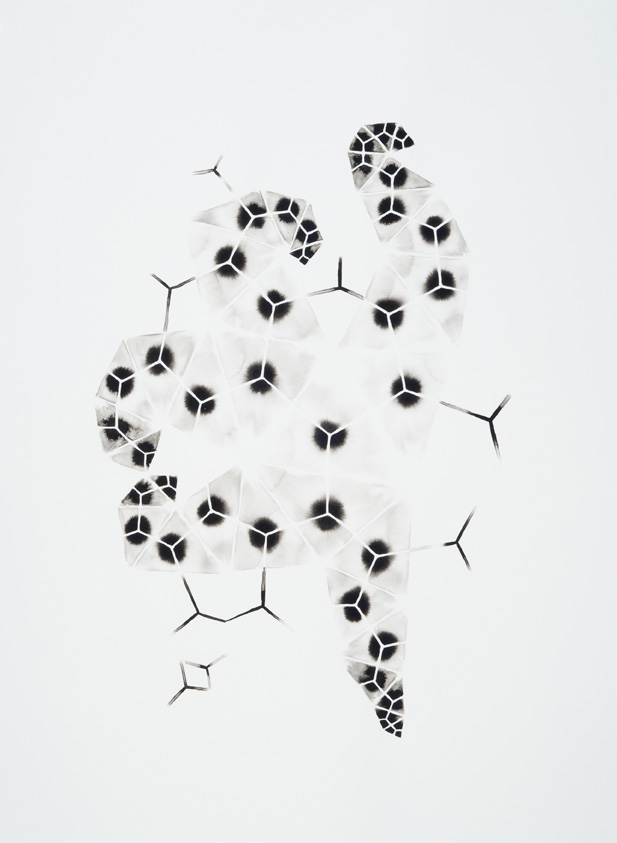 Symbionts 1, 2013, ink on paper, 30 x 22 inches