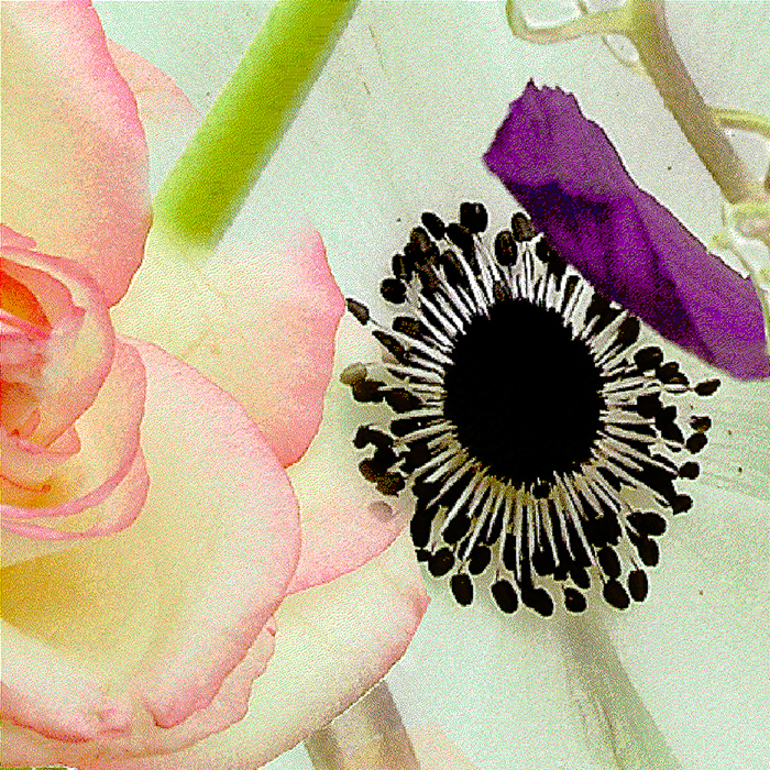 Anemone with Rose