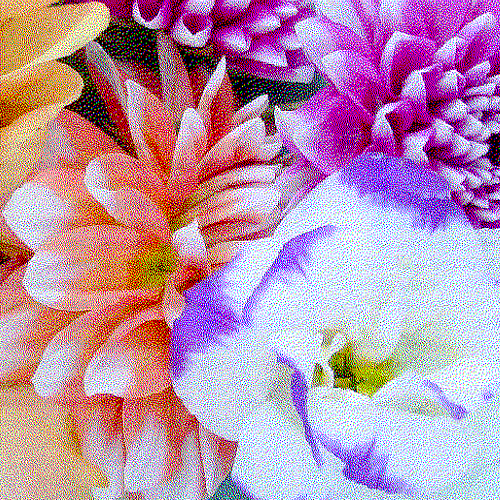 Dahlias with Blue and White Flower
