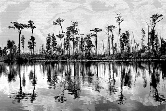 Swamp in the Rain