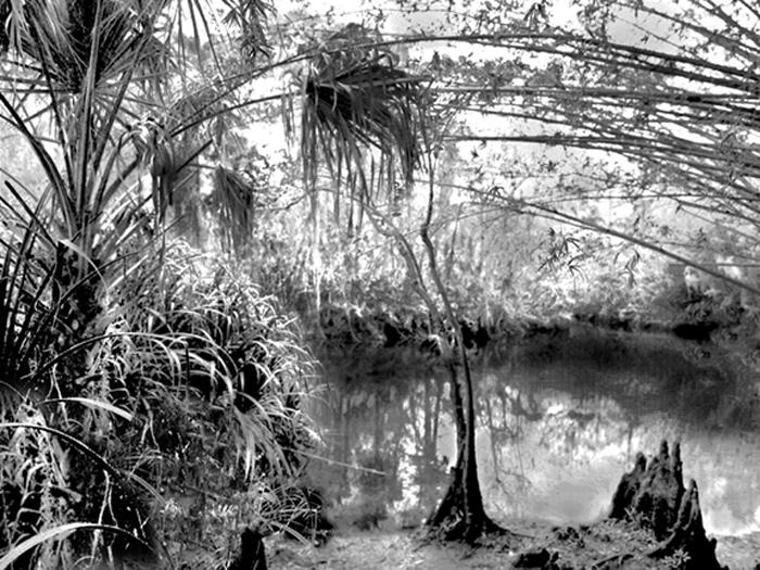 Into the Corkscrew Swamp
