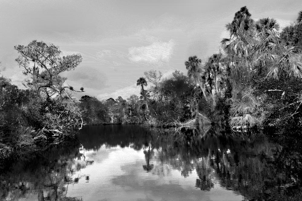 Vanishing Swamp