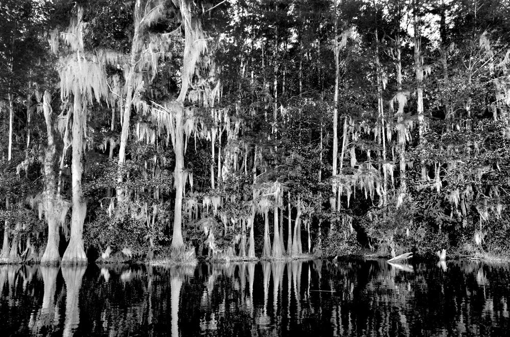 Haunting Swamp
