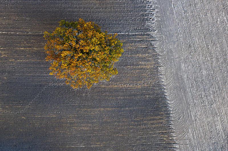 Seasons/Autumn #11