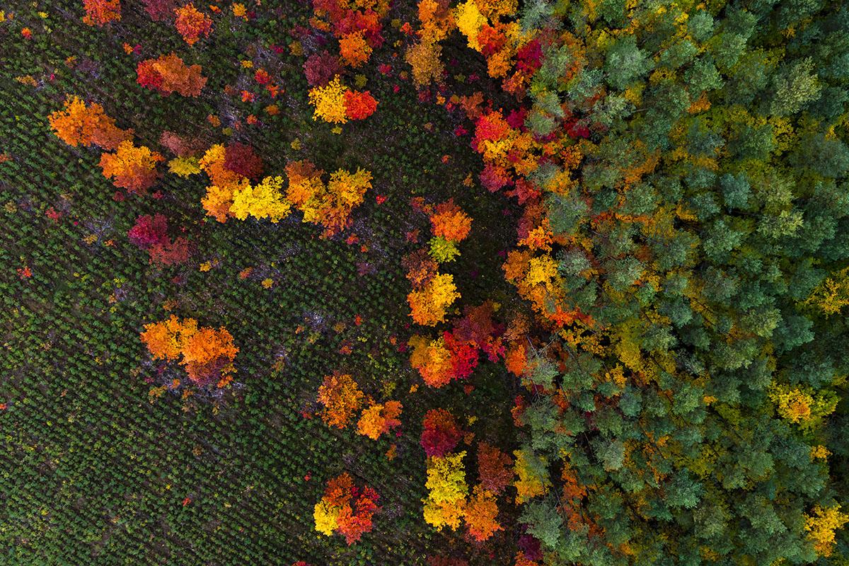 Kacper-Kowalski_SideEffects_Seasons_Autumn_#29.jpg